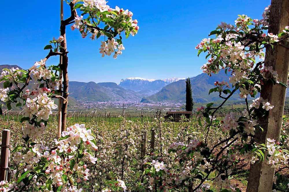 Frühlingsurlaub in Südtirol – Zwischen Almkräutern und Apfelblüten