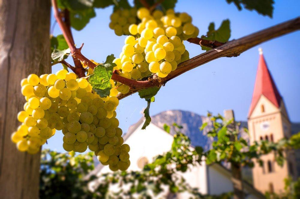 Weinreisen nach Südtirol/Italien – Karcherhof in Andrian